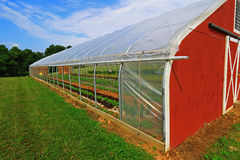 Vegetable Greenhouse. Greenhouse with vegetable plants inside on sunny day, concept for modern farming Stock Photography