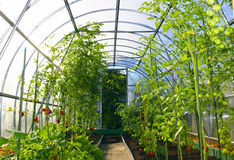 Vegetable greenhouses made of transparent polycarbonate Royalty Free Stock Photos