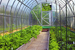 Vegetable greenhouses made of transparent polycarbonate Royalty Free Stock Photography