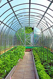 Vegetable greenhouses made of transparent polycarbonate Stock Photos