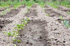 Vegetable ground arrangement Stock Photography