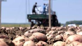 Vegetable growers stock video
