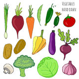 Vegetable hand drawn set. Isolated vegetables vector illustration. Vegetable stylized collection for design. Stock Photography