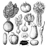 Vegetable hand drawn vector set. Isolated vegatarian engraved st Royalty Free Stock Image
