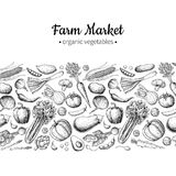 Vegetable hand drawn vintage vector illustration. Farm Market poster. Vegetarian set of organic products. Detailed food drawing. Great for menu, banner, label Royalty Free Stock Photography