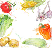 Vegetable  hand painted watercolor frame with splashes on white background. Royalty Free Stock Images