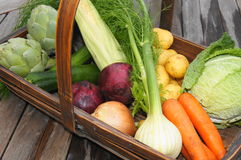 Vegetable Harvest Basket. Organic vegatables freshly harvested and displayed in trug basket. Artichoke, sweetcorn, cabbage, fennel, onions, potatoes, carrots and Stock Photos