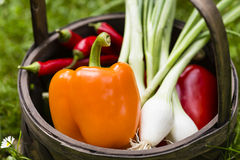 Vegetable harvest Royalty Free Stock Images