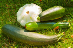 Vegetable harvest on the grass Stock Photo