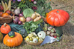 Vegetable harvest is sold at the fair. Royalty Free Stock Photography