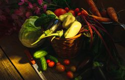 Vegetable Harvest Still Life Royalty Free Stock Photos