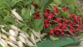 Vegetable harvest Stock Images