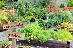 Vegetable and herb garden. Royalty Free Stock Image