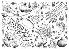 Hand Drawn of Bulb and Stem Vegetables Background. Vegetable and Herb, Illustration of Hand Drawn Sketch Delicious Fresh Bulb and Stem Vegetables  on White Stock Photo