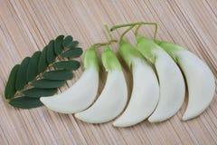 Vegetable Humming Bird Sesban Agasta flower Royalty Free Stock Image