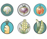 Original vegetable icons in the circle : corn, mushroom, beets, peppers, carrots, pea. Vegetable icons in the circle :  corn, mushroom, beets, peppers, carrots Royalty Free Stock Images