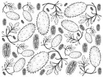 Hand Drawn of Fresh West Indian Gherkin Fruits Background. Vegetable, Illustration Background Pattern of Hand Drawn Sketch West Indian Gherkin Friuts Isolated on Royalty Free Stock Image