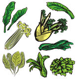 Vegetable illustration series Stock Images