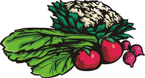 Vegetable illustration series Royalty Free Stock Images
