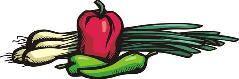 Vegetable illustration series Stock Photos