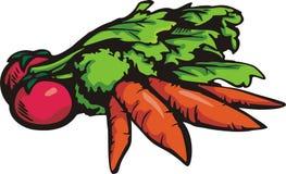 Vegetable illustration series Royalty Free Stock Image