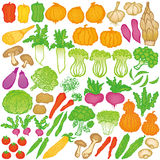 Vegetable illustrations. Royalty Free Stock Photo