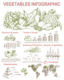 Vegetable infographics design with charts Stock Photo