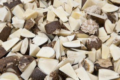 Vegetable Ivory - Tagua Seeds Cut Stock Images
