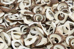 Vegetable Ivory - Tagua Seeds Royalty Free Stock Image