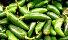 Vegetable - Jalapeno Pepper. Jalapeno pepper in the middle of many jalapeno peppers royalty free stock photography