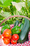 Vegetable of kitchen garden in a basket Stock Photo