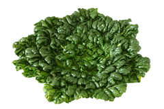 Vegetable leaves Stock Photo