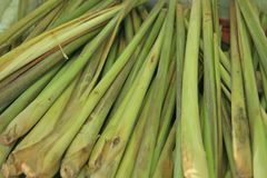 Vegetable - lemongrass Royalty Free Stock Images