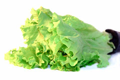 Vegetable, Lettuce leafs isolated on white. Close-up Royalty Free Stock Photos