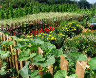 Vegetable luxuriance garden. In the late summer time Royalty Free Stock Photos