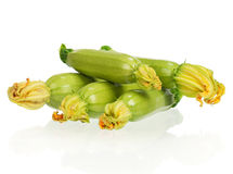 Vegetable marrow Royalty Free Stock Photography