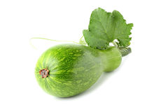 Vegetable marrow with leaf. Stock Images