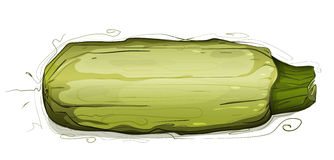 Vegetable Marrow Squash Illustration Stock Photo