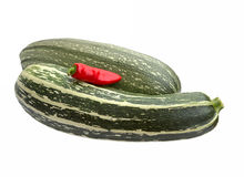 Vegetable marrow zucchini and red pepper Royalty Free Stock Image