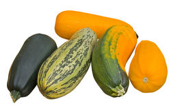 Vegetable marrows 36 Stock Photography