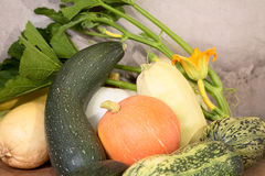 Vegetable marrows  pumpkins with flower Stock Image