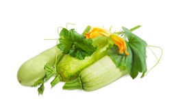Vegetable marrows and stalk with leaves, tendrils and flowers. Three fresh vegetable marrows and stalk with leaves tendrils and flowers on a light background Royalty Free Stock Photos
