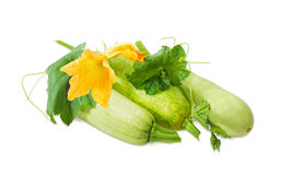 Vegetable marrows and stalk with leaves, tendrils and flowers. Three fresh vegetable marrows and stalk with leaves tendrils and flowers on a light background Stock Images
