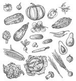 Vegetable and mushroom sketch of fresh veggies. Vegetable and mushroom sketch set of fresh farm veggies and vegetarian food. Pepper, tomato and carrot, cabbage Royalty Free Stock Photos