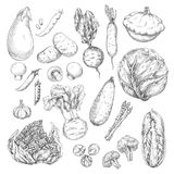 Vegetable and mushroom sketch set for food design Stock Photos