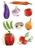 Vegetable Painting Stock Photography
