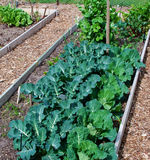 Vegetable Patch Royalty Free Stock Photo