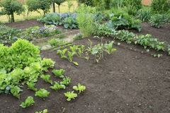 Vegetable patch Royalty Free Stock Photos