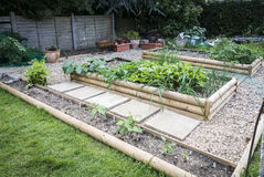 Vegetable Patch. Garden vegetable patch depicting square foot gardening Royalty Free Stock Photos