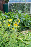 Vegetable Patch Royalty Free Stock Images